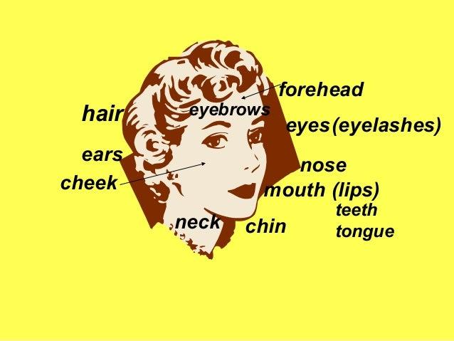 hair  eyebrows  ears cheek  forehead eyes (eyelashes)  nose mouth (lips) neck  chin  teeth tongue
