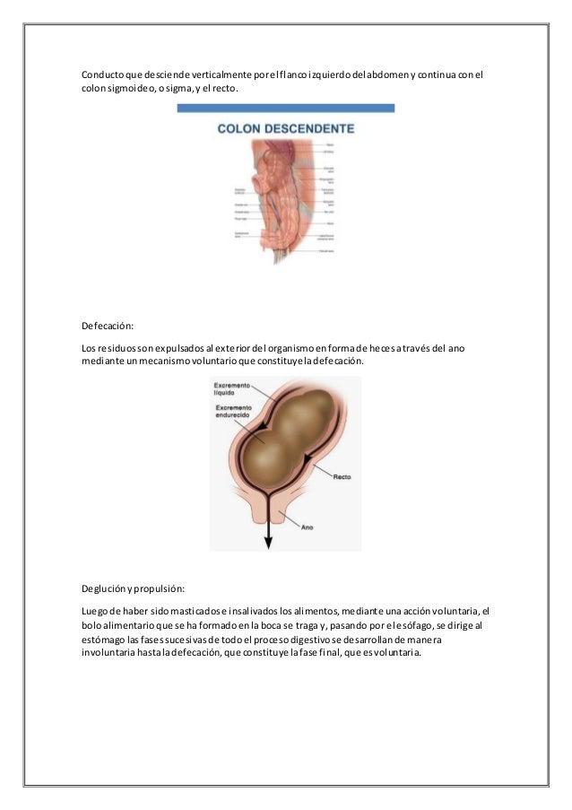 Contemporáneo Anatomía De Un Castillo De Asesinato Adorno - Anatomía ...