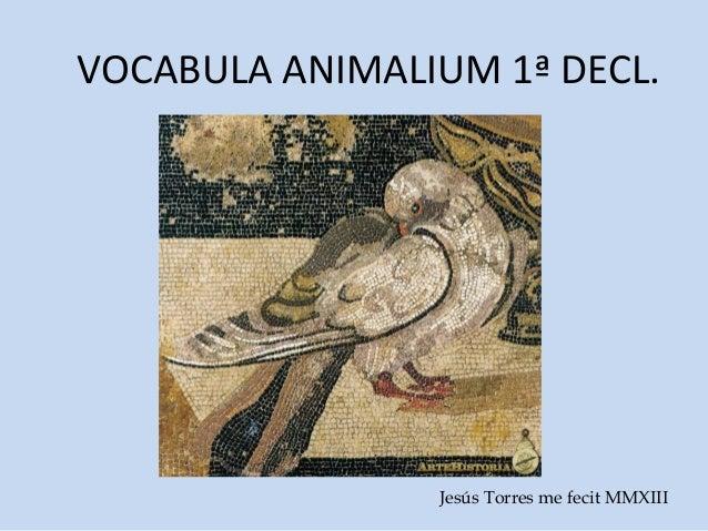 VOCABULA ANIMALIUM 1ª DECL.                Jesús Torres me fecit MMXIII