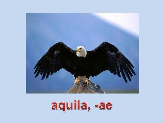 Vocabulario de animales de la 1 Slide 3