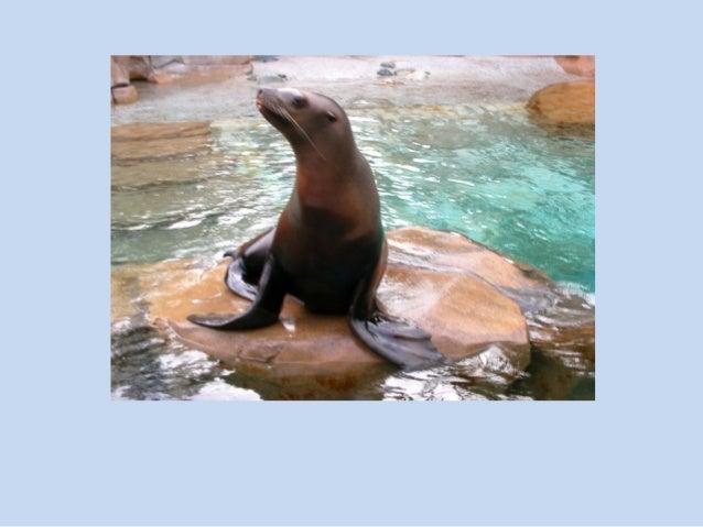 Vocabulario de animales de la 1