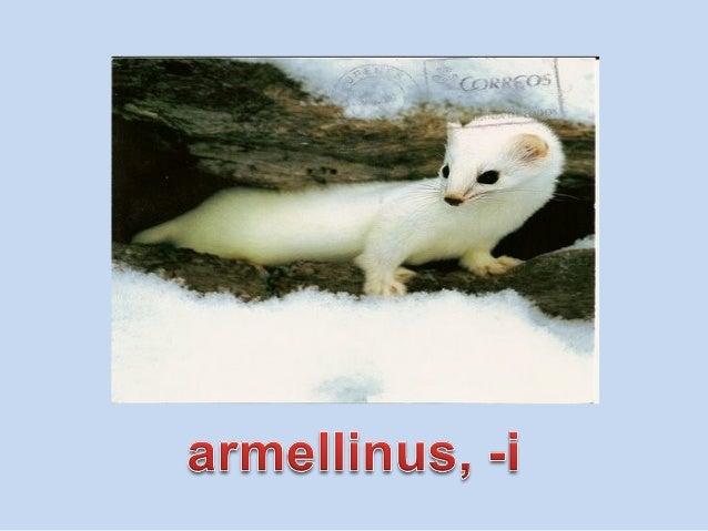 Vocabulario de animales de la 2 Slide 3