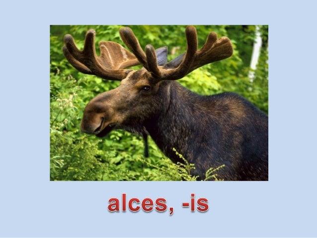 Vocabulario de animales de la 3 Slide 3