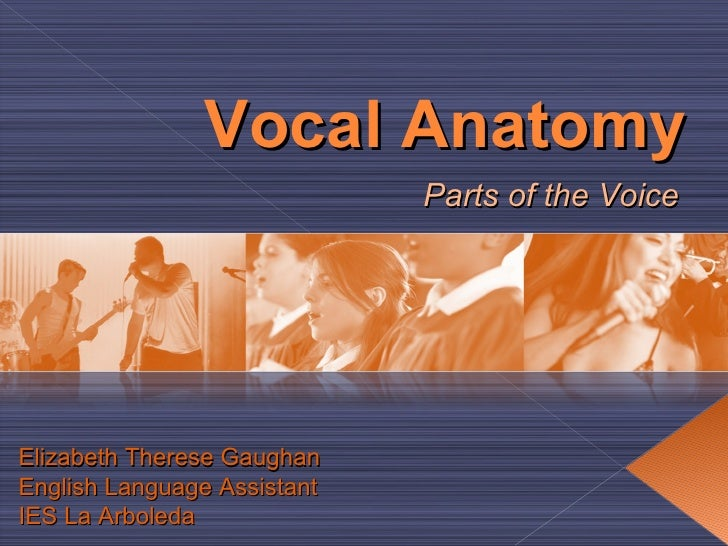 Vocal Anatomy Parts of the Voice Elizabeth Therese Gaughan English Language Assistant IES La Arboleda