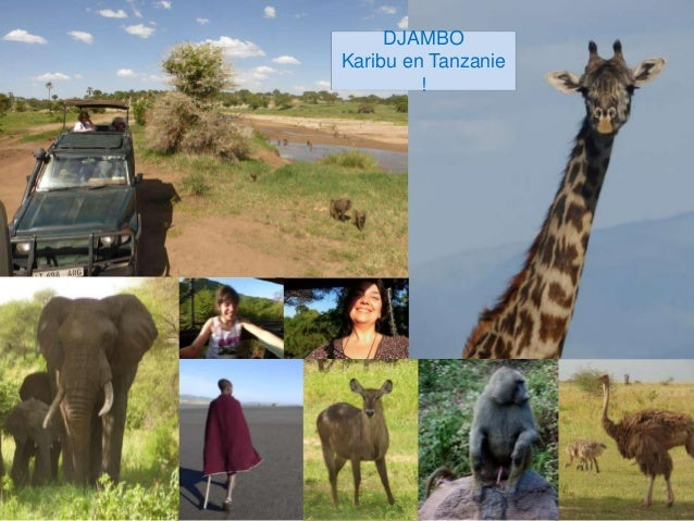 DJAMBO Karibu en Tanzanie !