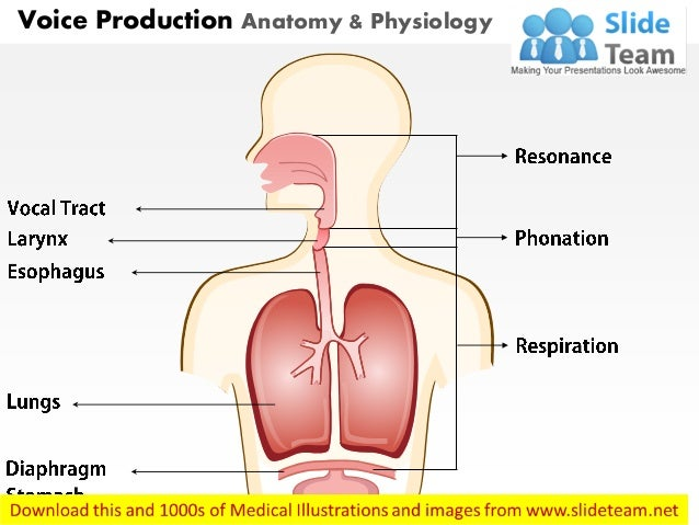 Voice production anatomy & physiology medical images for power point