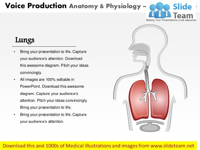 Voice Production Anatomy  U0026 Physiology Medical Images For Power Point