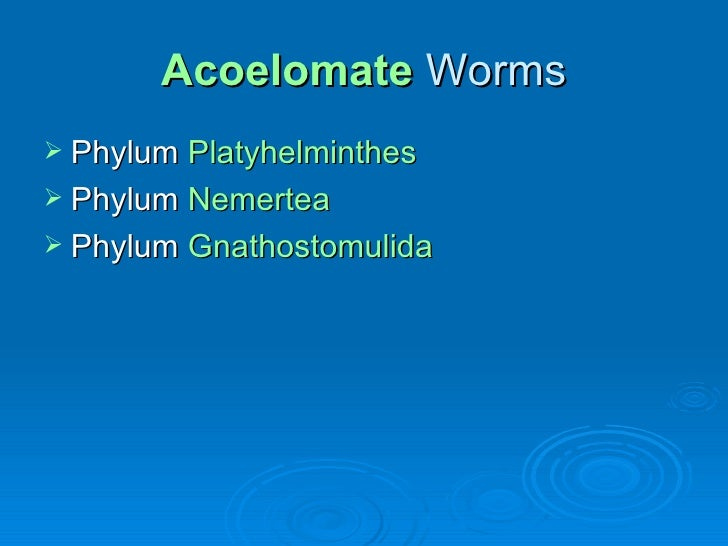 Acoelomate   Worms <ul><li>Phylum  Platyhelminthes </li></ul><ul><li>Phylum  Nemertea </li></ul><ul><li>Phylum  Gnathostom...
