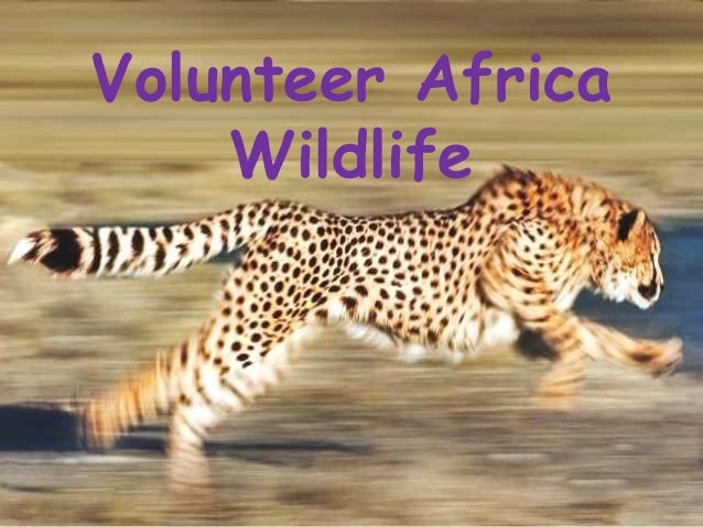 Volunteer Africa Wildlife