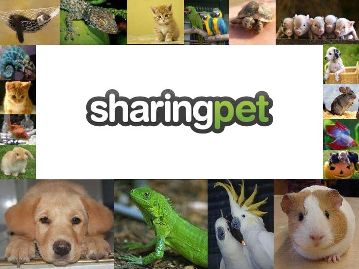 A platform that helps YOU take care of animals from your sofa