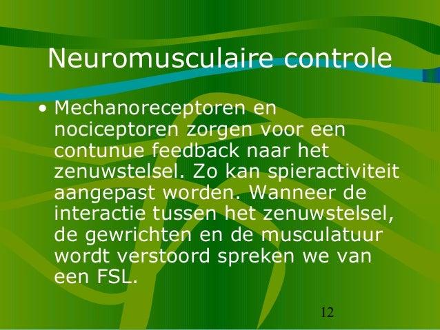 12 Neuromusculaire controle • Mechanoreceptoren en nociceptoren zorgen voor een contunue feedback naar het zenuwstelsel. Z...
