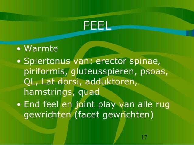 17 FEEL • Warmte • Spiertonus van: erector spinae, piriformis, gluteusspieren, psoas, QL, Lat dorsi, adduktoren, hamstring...