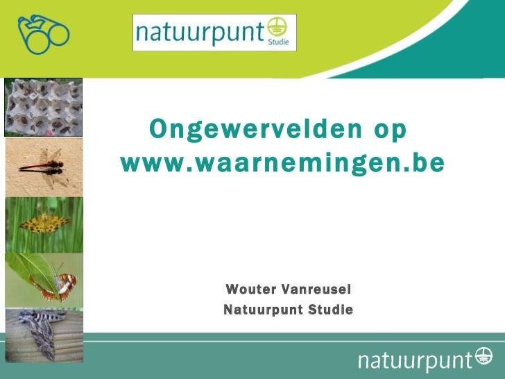 Ongewervelden op  www.waarnemingen.be Wouter Vanreusel Natuurpunt Studie