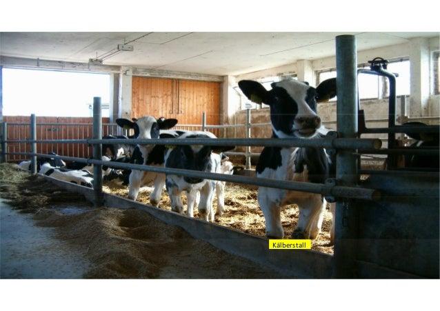 Milchviehanlage Großzöbern