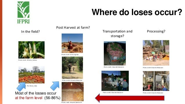Impacts of Reducing Food Losses Across the Value Chain
