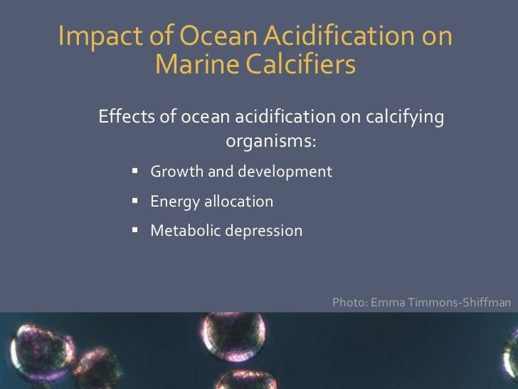 The Effects of Ocean Acidification on the Marine Food Chain