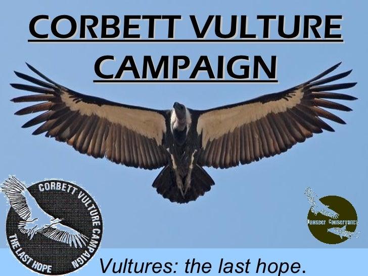 CORBETT VULTURE   CAMPAIGN   Vultures: the last hope.