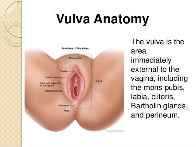 cancer of the vulva, Human Body