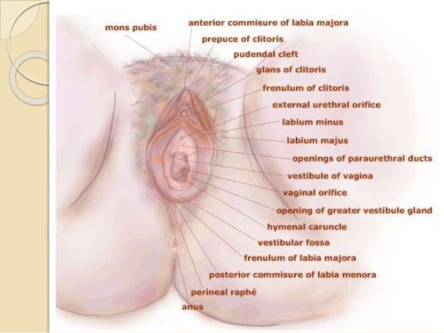 Cancer Of The Vulva