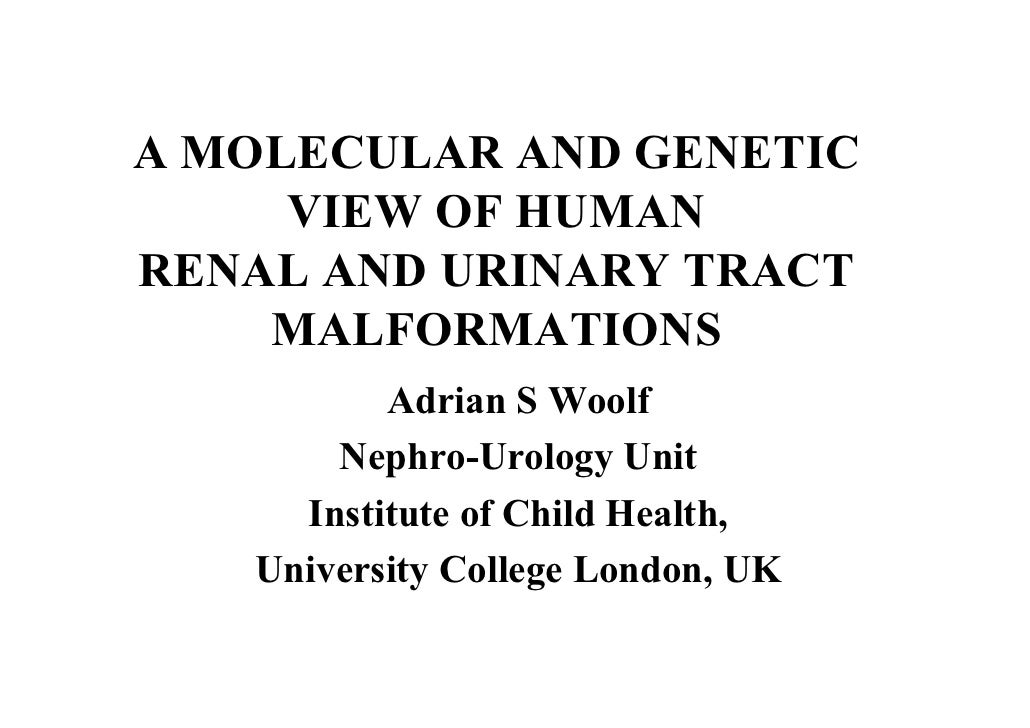 A MOLECULAR AND GENETIC      VIEW OF HUMAN RENAL AND URINARY TRACT     MALFORMATIONS           Adrian S Woolf        Nephr...