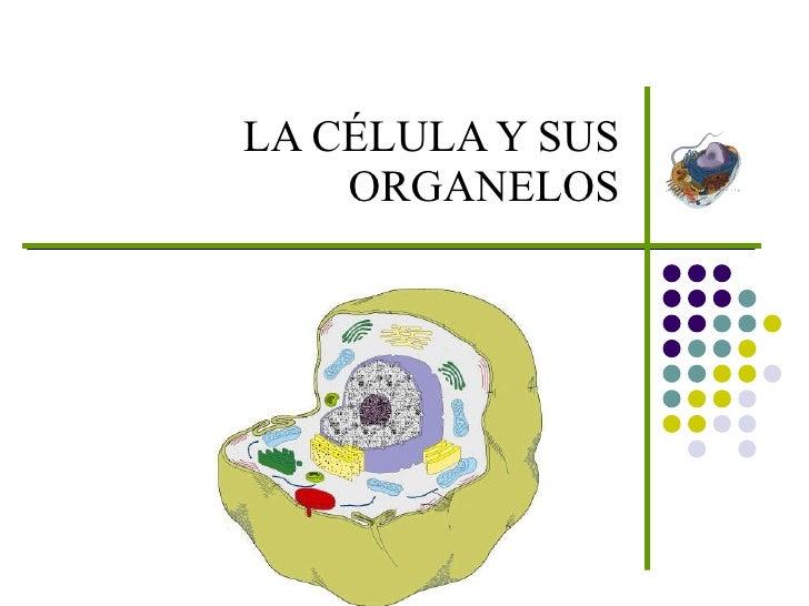 LA CÉLULA Y SUS ORGANELOS
