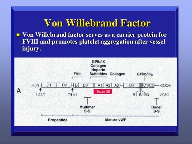 Von Willebrand Factor  •Adapted from Ginsburg D, Bowie EJW: Molecular genetics of von Willebrand disease. Blood 79:2507, 1...