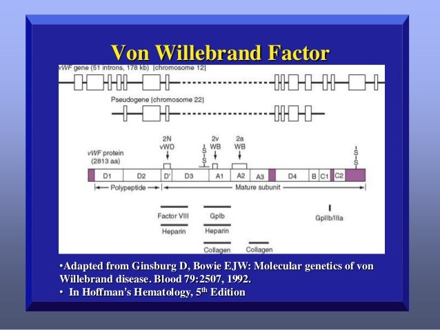 Cellular Biosynthesis   Endoplasmic reticulum: – VWF dimer is disulfide-bonded at the C-terminus. – The signal peptide is...