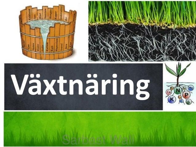 Växtnäring Sarbast Wali