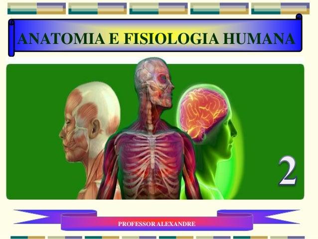 ANATOMIA E FISIOLOGIA HUMANA PROFESSOR ALEXANDRE