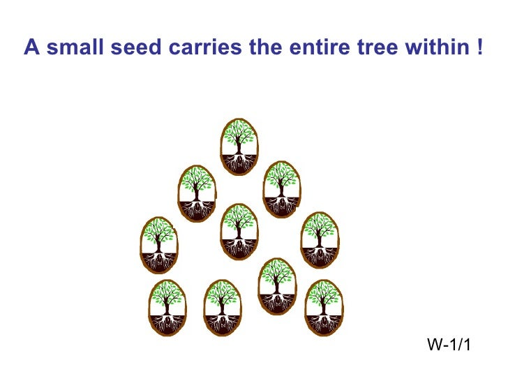A small seed carries the entire tree within ! W-1/1