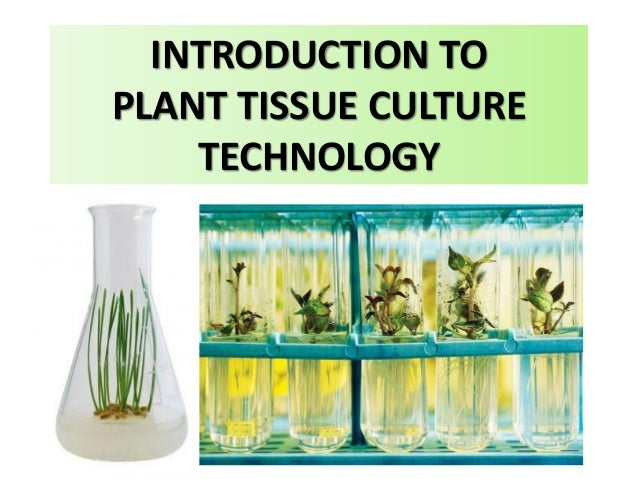 introduction to plant tissue culture Were due to the introduction of additional salts from plant tissue extracts which were being tested at that time the ms tissue culture very few articles in plant science can come close to this highly cited paper.