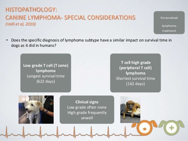 canine high grade lymphoma  jill scott insomnia