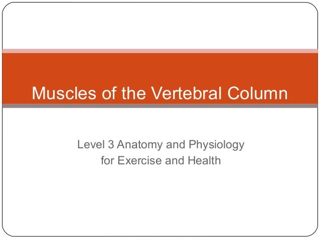 Muscles of the Vertebral Column Level 3 Anatomy and Physiology for Exercise and Health