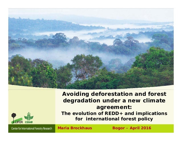 Deforestation an overview of global programs and agreements