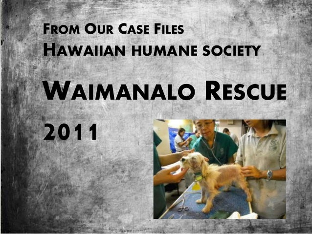 Waimanalo Puppy Mill Rescue
