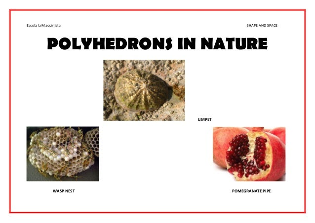 Regular Polygons In Nature Wall display 3d...