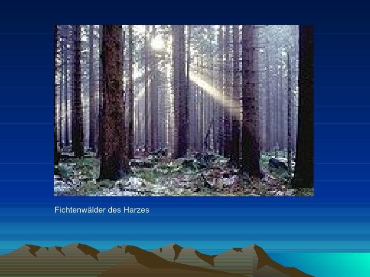 Fichtenwälder des Harzes