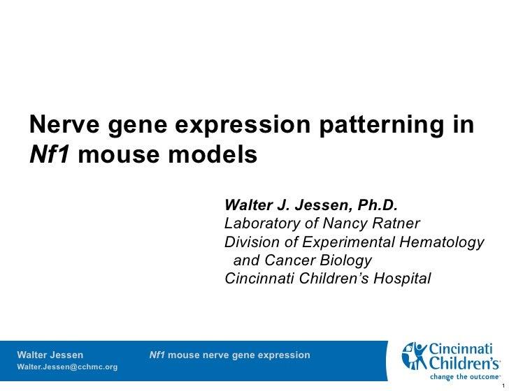 Nerve gene expression patterning in   Nf1 mouse models                                         Walter J. Jessen, Ph.D.    ...