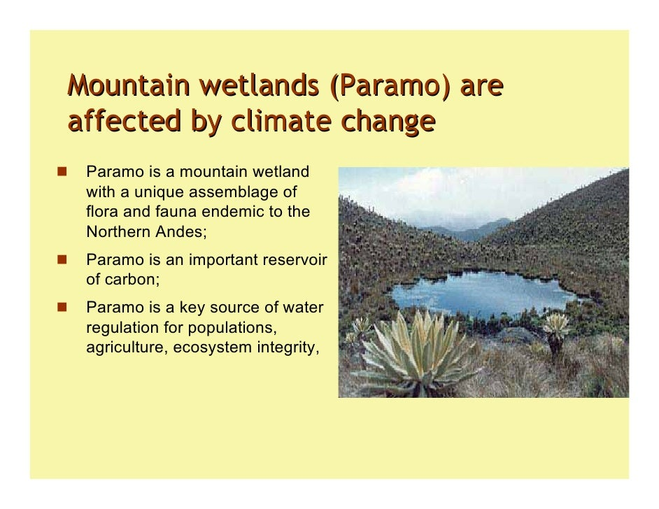 Wetlands: Climate adaptation, mitigation and biodiversity protection