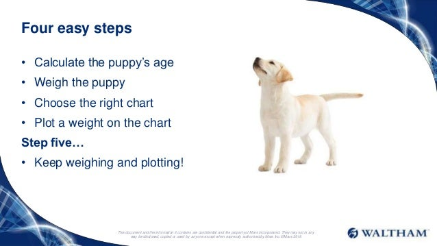 Lab Puppies Growth Chart Exploredogs