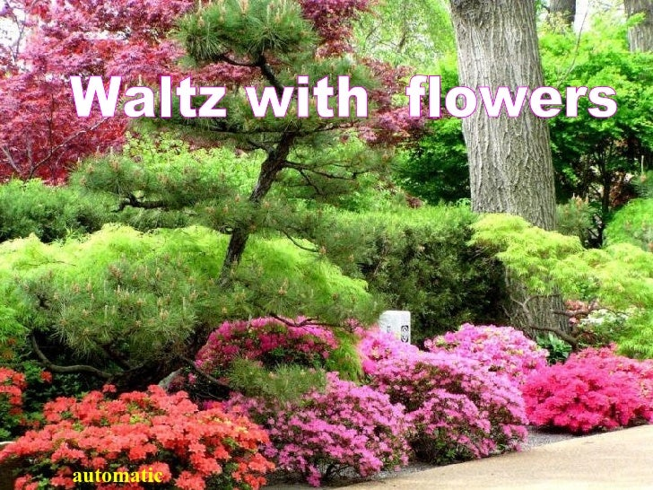 Waltz with  flowers  automat ic