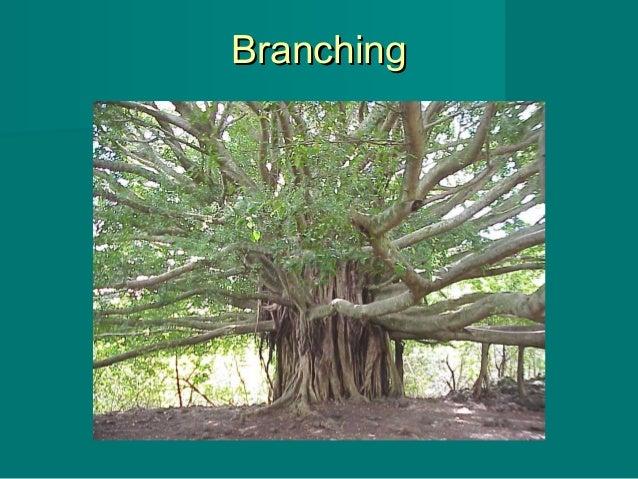 BranchingBranching