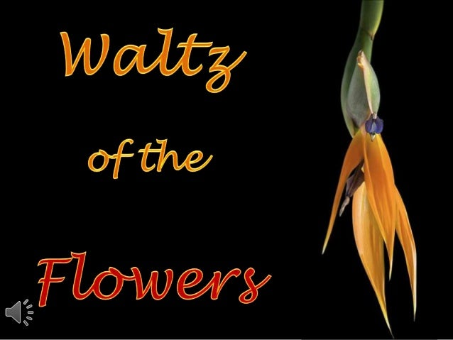 Waltz of the flowers (v.m.)