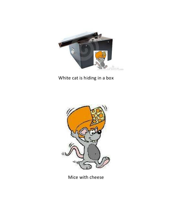 White cat is hiding in a box    Mice with cheese