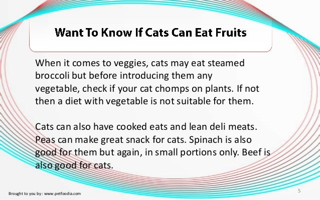 Cat Will Not Eat Cd Diet