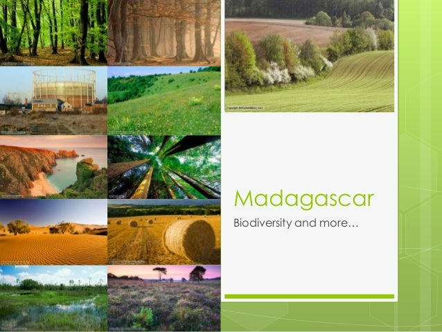 MadagascarBiodiversity and more…
