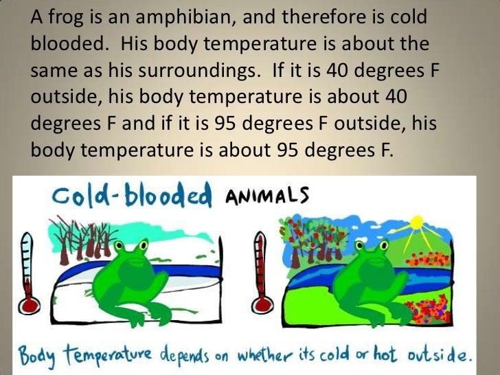 warm blooded animals