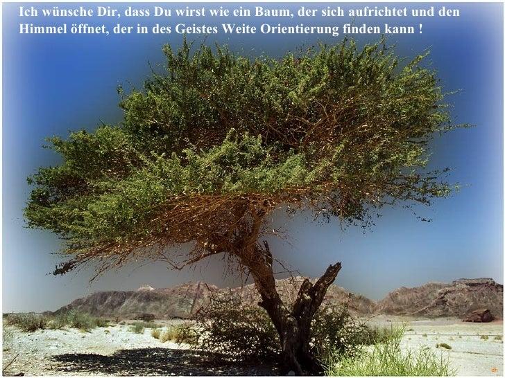Wie Ist Ein Leben Baum Das