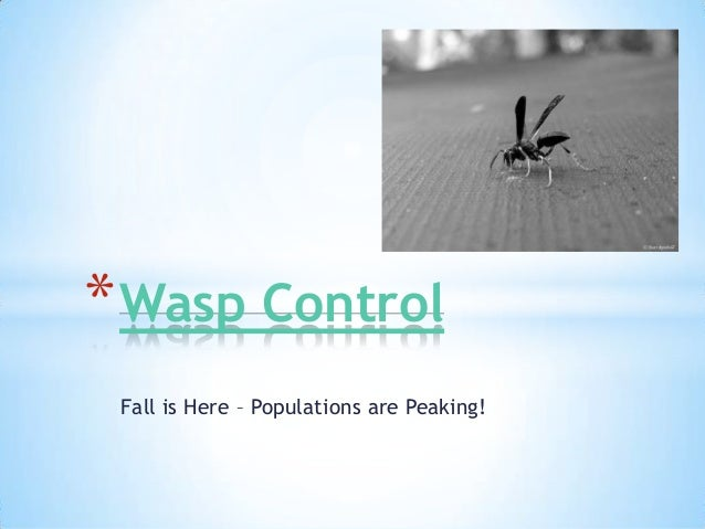 * Wasp Control Fall is Here – Populations are Peaking!