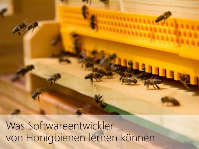 Was Softwareentwickler  von Honigbienen lernen können